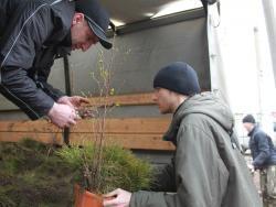 В рамках акции «Один житель – одно дерево» в Рубцовске высадили более 600 деревьев